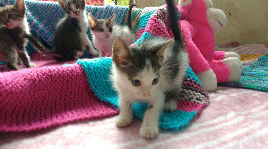 gatos-abandonados-bauru1