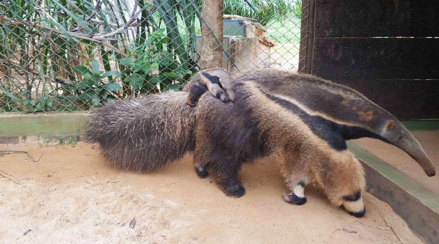 zoo-bauru1
