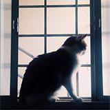 gato-paula