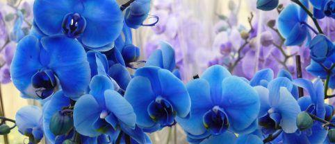 orquidea-exposicao-bauru1
