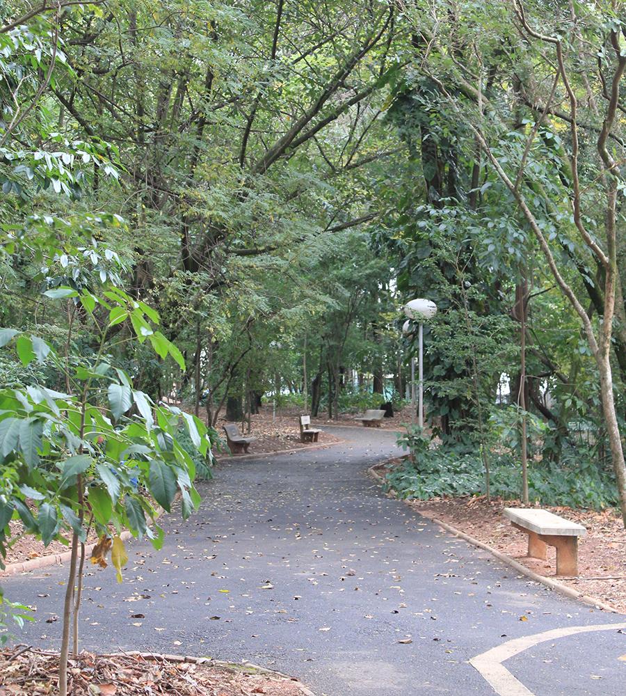 Bosque da Comunidade em Bauru