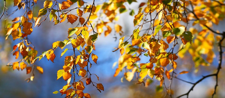 dicas outono bauru