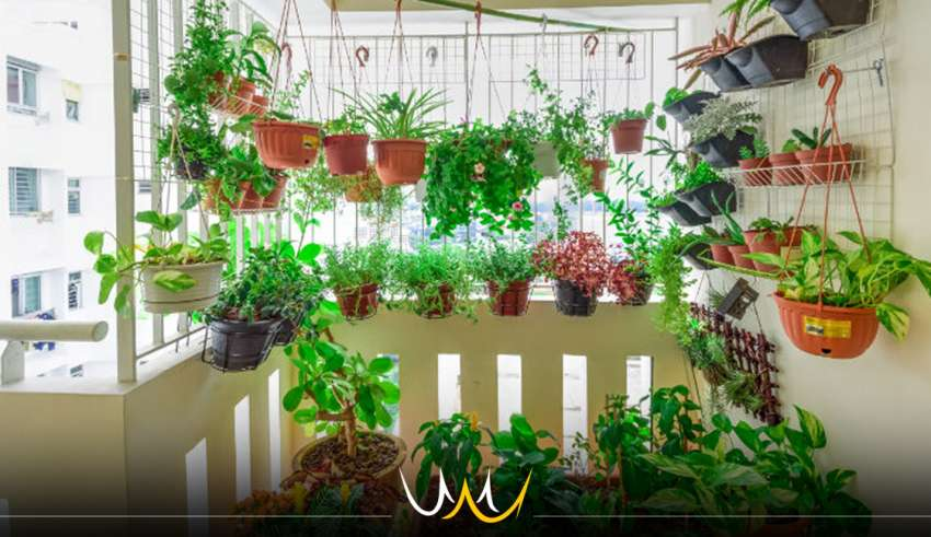 plantas bauru