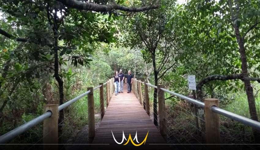 trilha jardim botânico