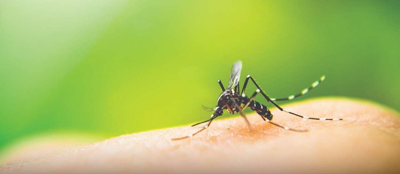 dengue bauru