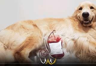 doação de sangue animal bauru