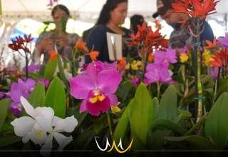 feira de orquídeas