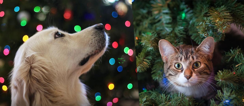 Especialistas dão 5 dicas para proteger os pets nas festas de final de ano
